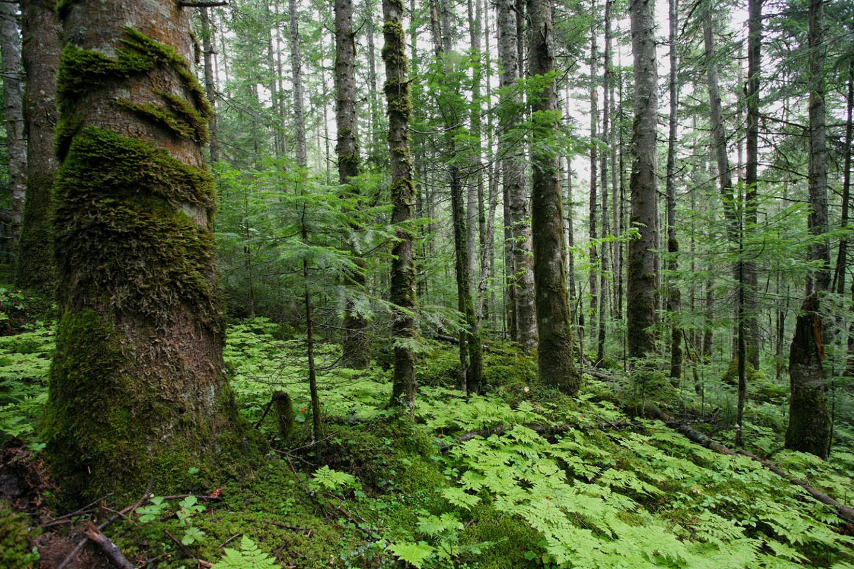Картинки лесных массивов